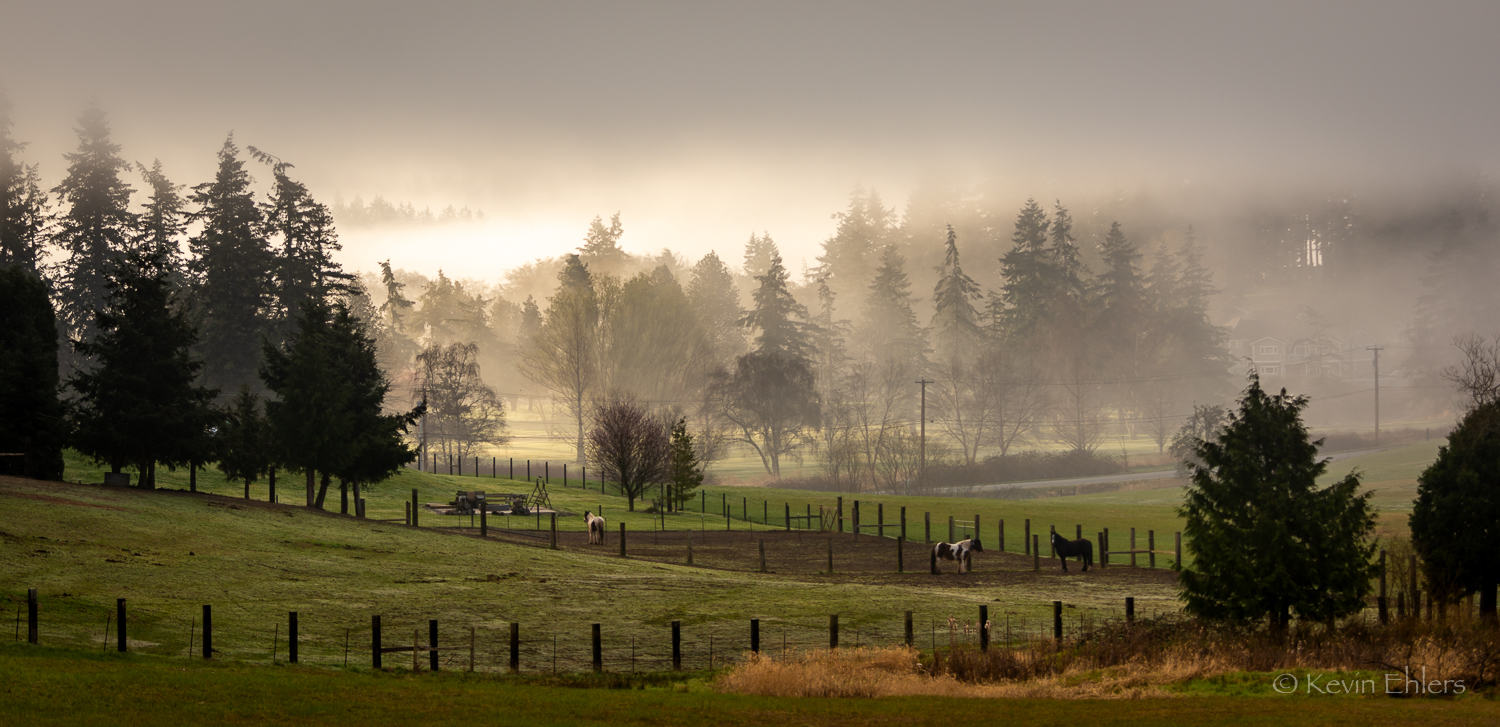 Foggy Morning or Zombie Apocalypse ?  Photo by Kevin Ehlers (c). Nikon d810 + 80-400mm f5.6 @ f5.6, 135mm