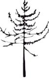 balsamcreative_logo