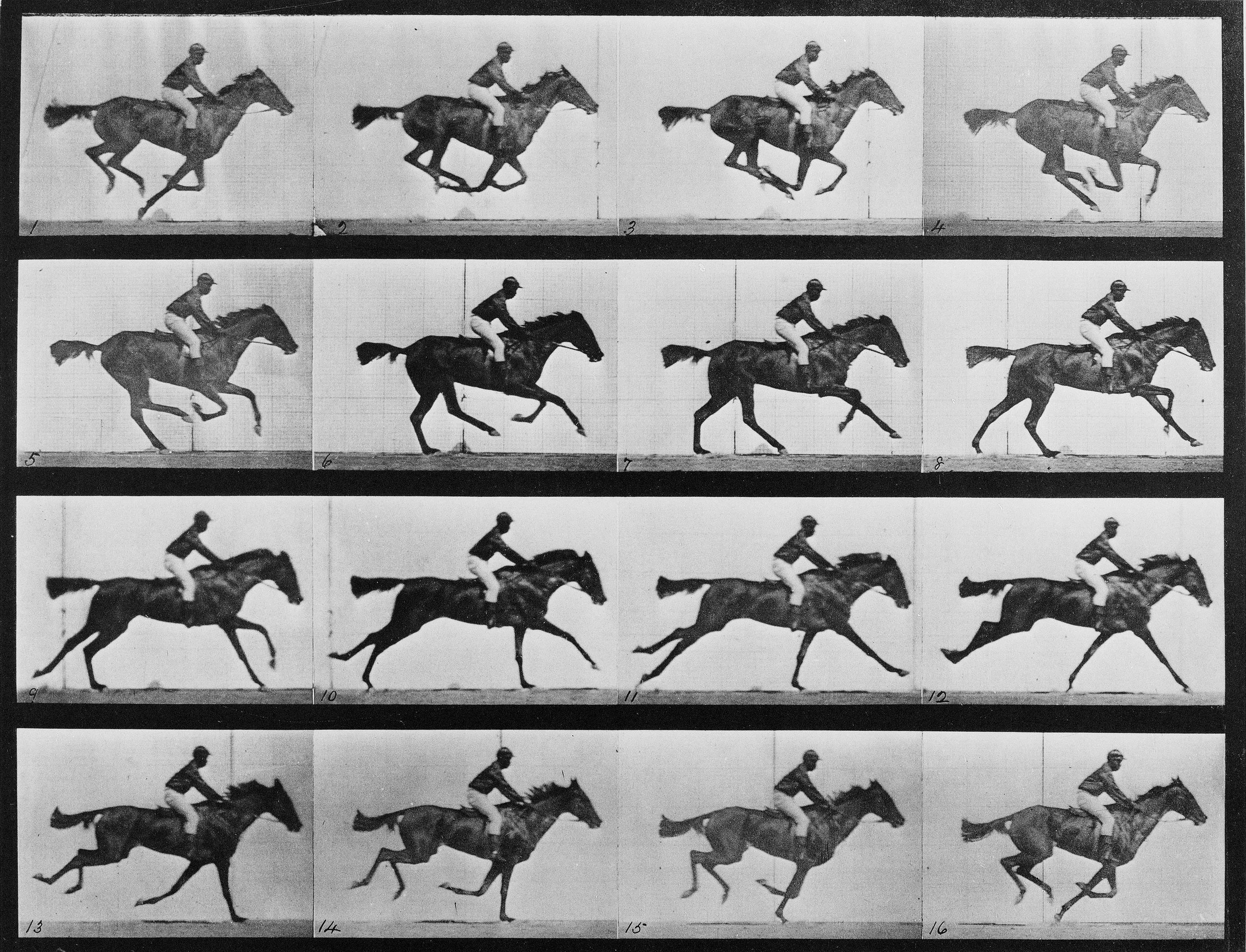 The Horse in Motion, Edweard Muybridge 1878, Public Domain