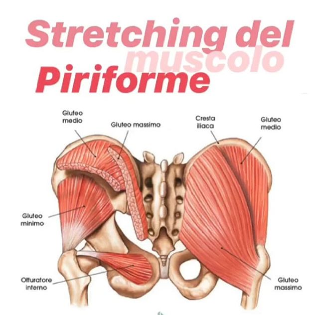 I had to share the Glute muscles in Italian! Haha! How awesome! Have a wonderful Thursday and be good to your Gluteo Massimo! #budawellness #budamassage #budatx #supportlocalbusinesses #glutes #gluteo #italian #bodiesarebodies #weareallbodies