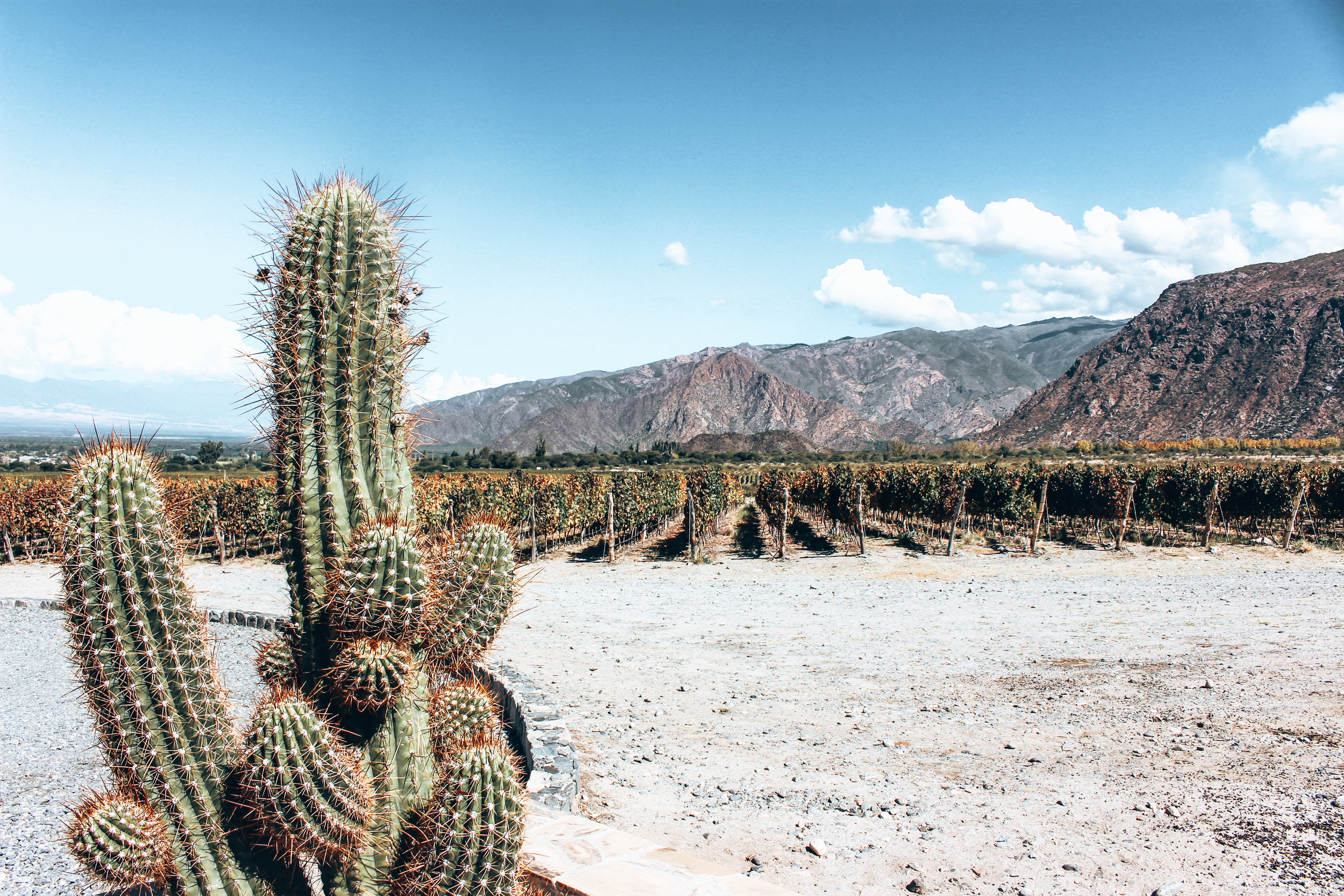 Bodega Piatelli Winery - Cafayate