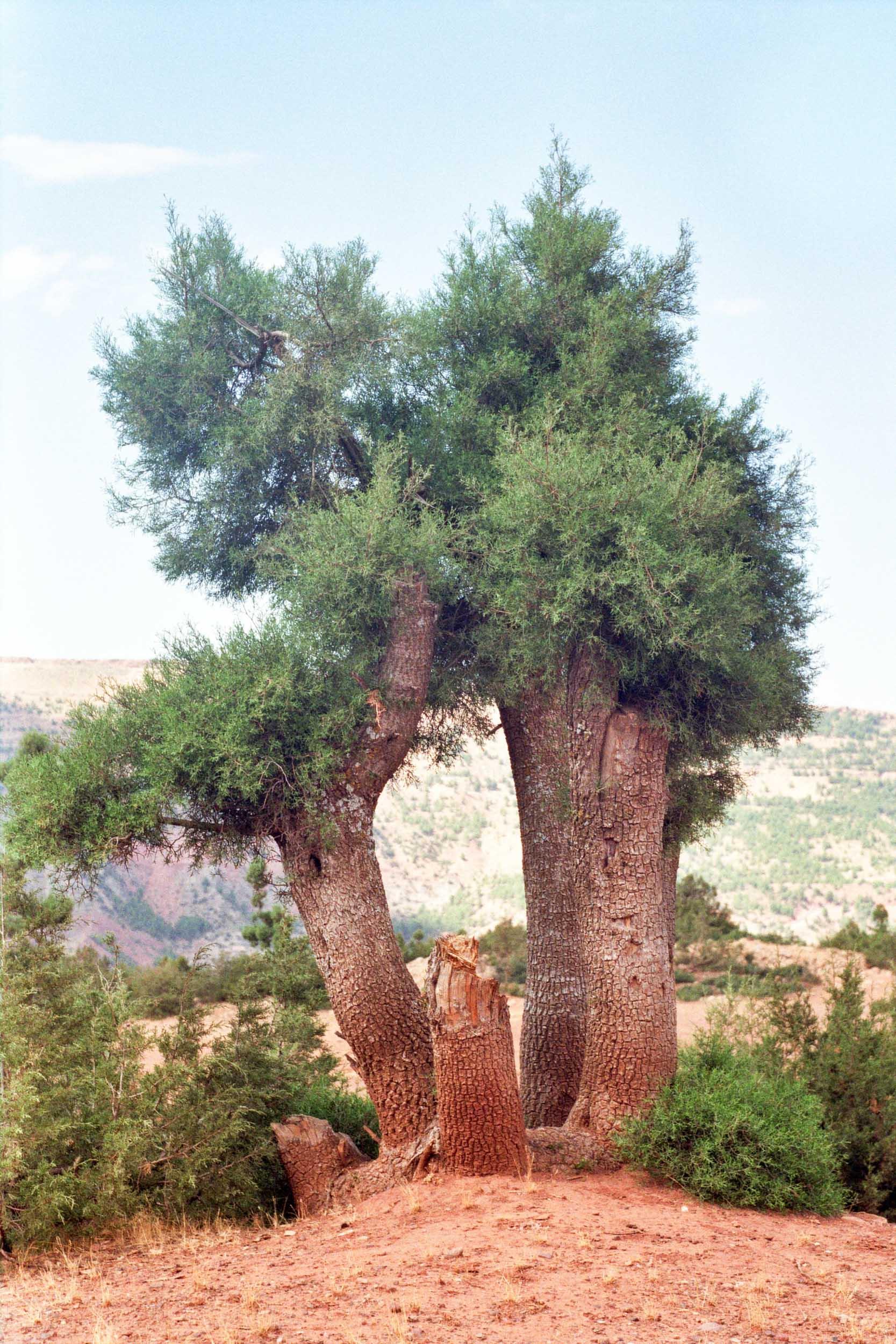 FVF_Morocco_Website-16.jpg