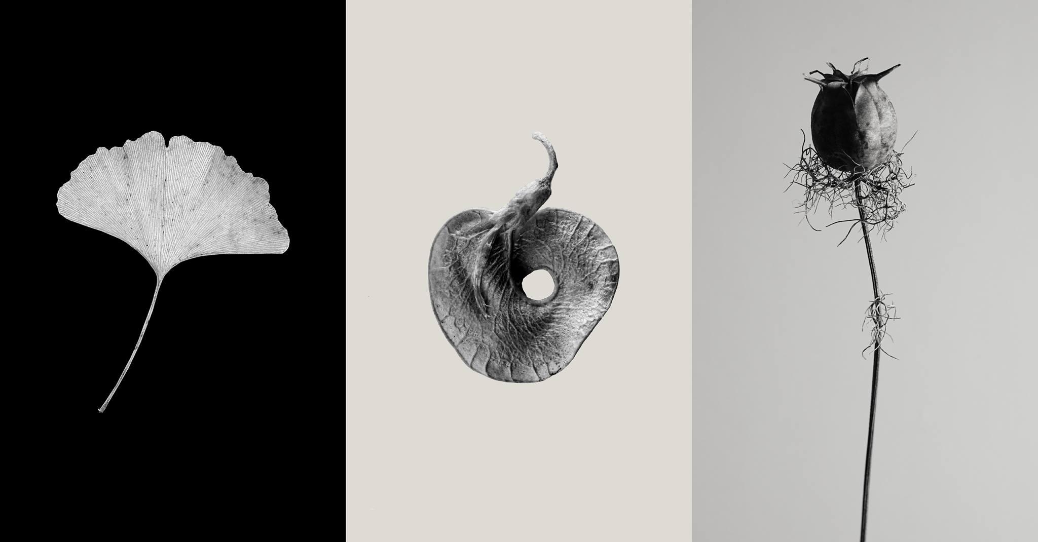 Die drei Fotoreihen