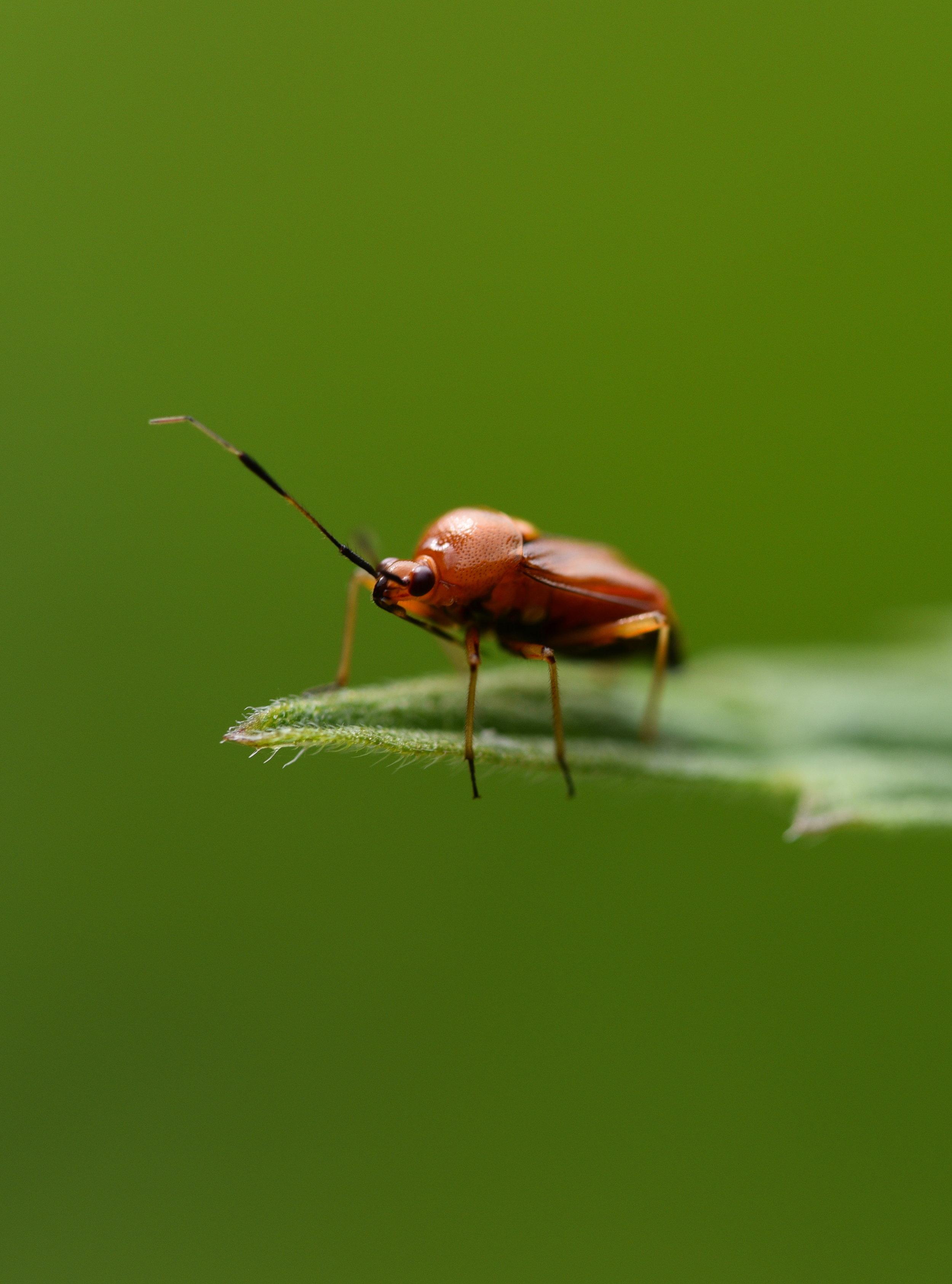 MACRO. NATURFOTOGRAFIE - Eine ausgedehnten Fotodatenbank zur heimischen Flora und Fauna bietet Einblicke in die Details einer filigranen Welt.