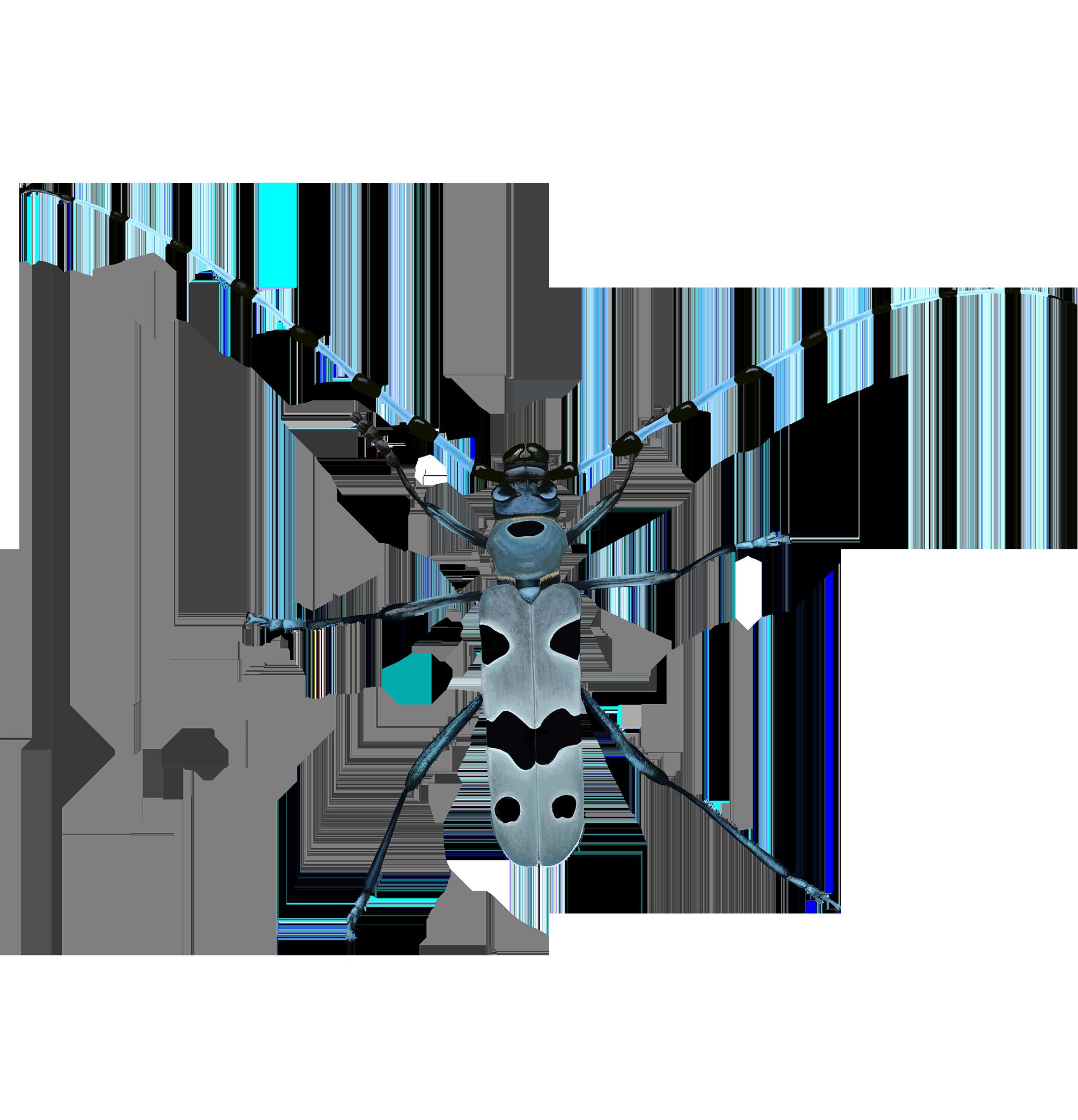 INSEKTEN. - Digitale Illustrationen verschiedener in Mitteleuropa heimischer Insektenarten. Ihre unglaubliche optische Vielfalt fasziniert Wissenschaftler und Liebhaber seit Jahrhunderten. Doch das rasche zusammenbrechen vieler Bestände alarmiert zunehmend - dieses Projekt soll Sensibilisieren und ausgewählte Arten in den Fokus stellen.