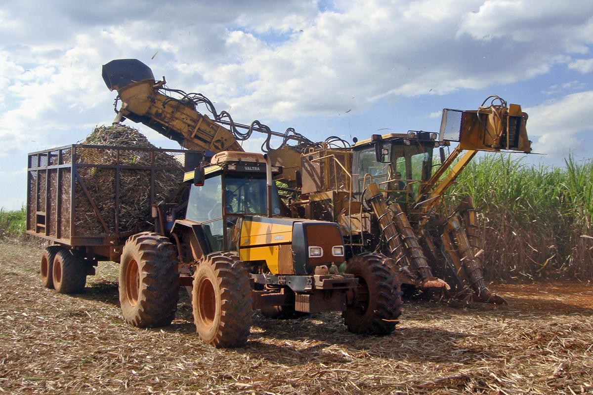 Sugarcane_harvest nov 2016.JPG