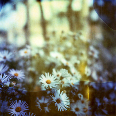 Polaroid artwork Daisies by Taylor Anne Smith.jpg