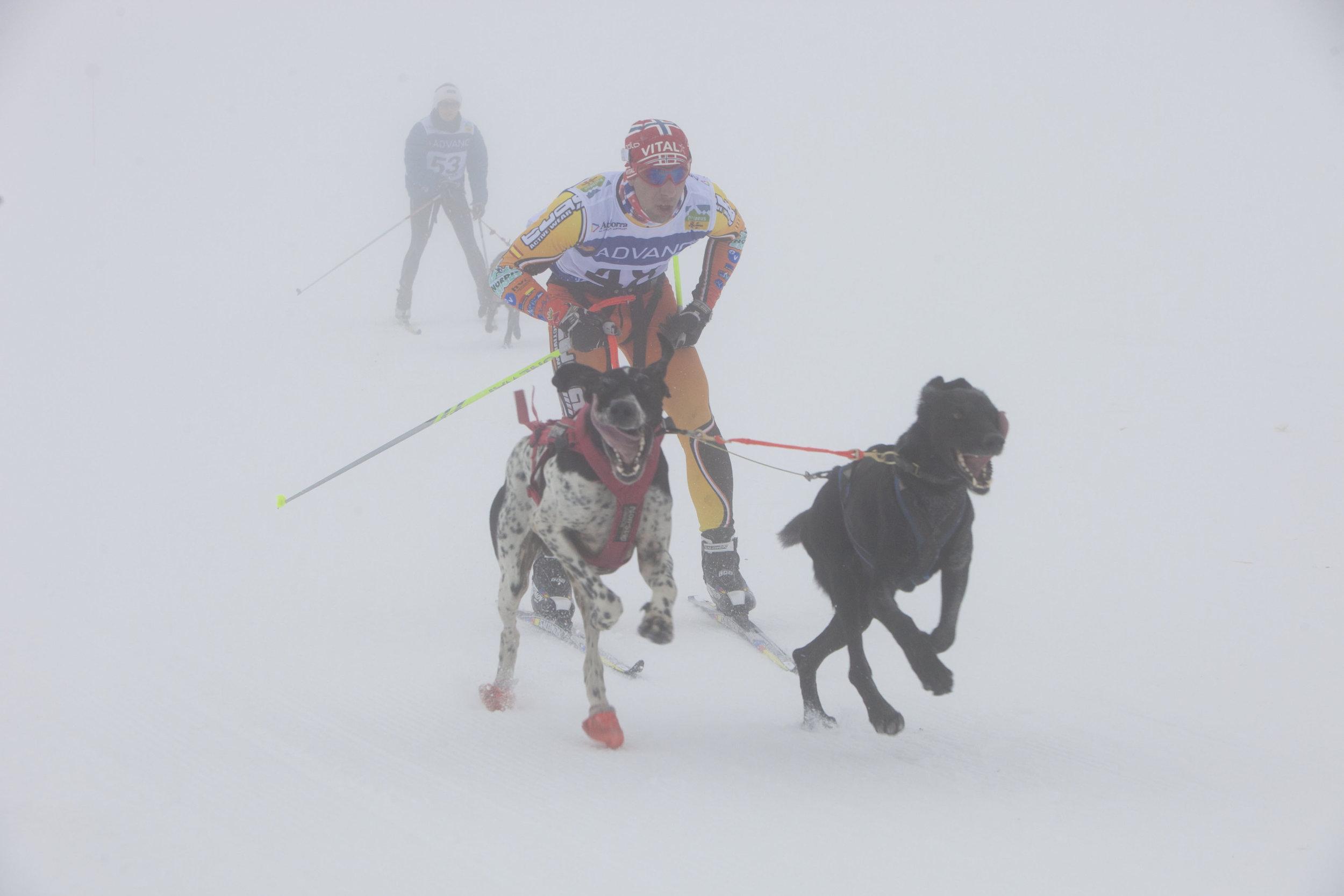 skijoring3-victor-carrasco.jpg