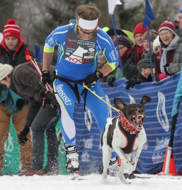 Loppet-skijoring-2.jpg