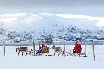 reindeer-sledding-feeding-and-sami-culture-in-troms-330979.jpg