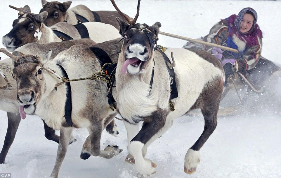 Nadym Reindeer Female Rider.jpg