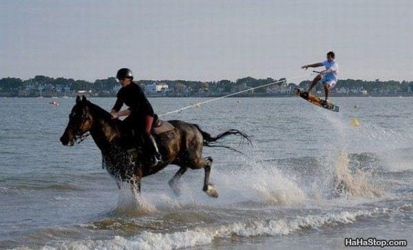 Horse Boarding Surf 3.jpg