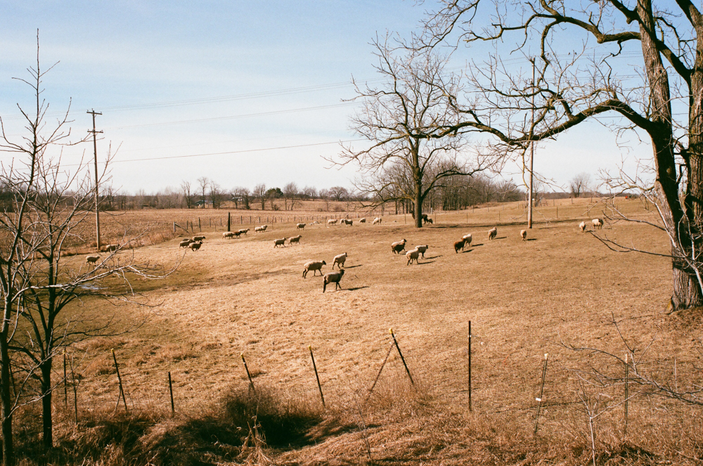 Shot by  Eric Hergenreder on Fuji Superia 400 with Canon AE-1 PROGRAM & Canon 35-70mm 3.5-4.5