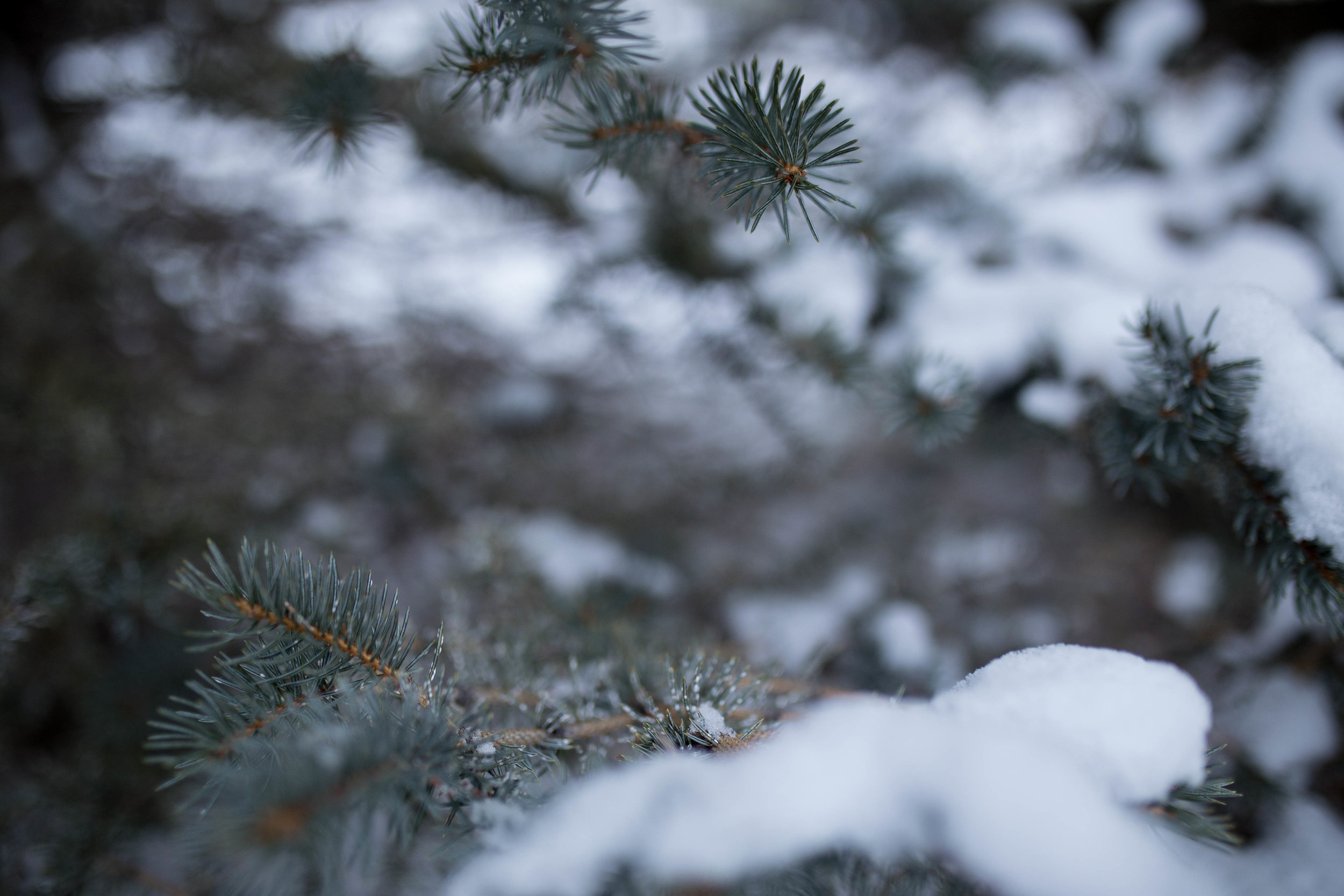 WinterCouplephotosRexburg (35 of 52).jpg