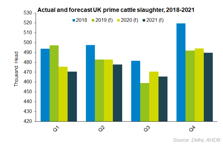 forecast prime cattle.png