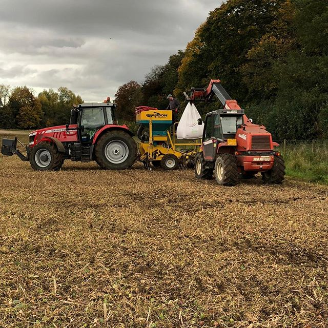 Wheat seed provided by #bartsagri being drilled in Sevenoaks today #wheat #seed #teambarts #farming
