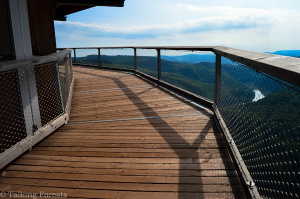 A wooden path with amazing views! Photo Credit: Talking Forests