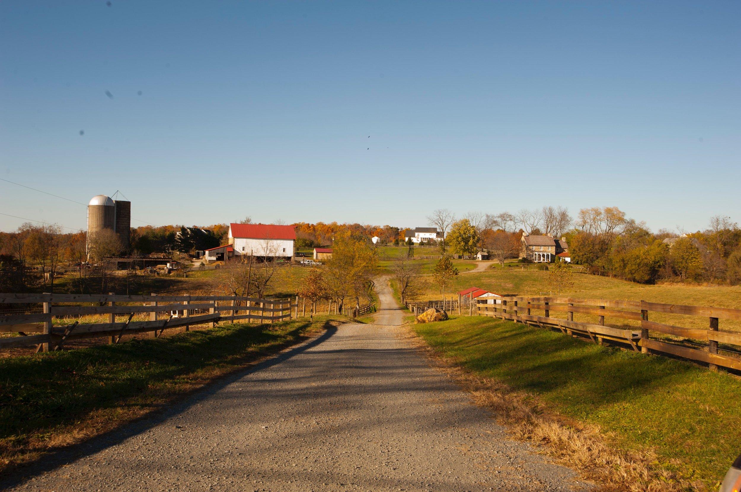 The Cochran's farm, where a flock of sheep often grazes the front fields.