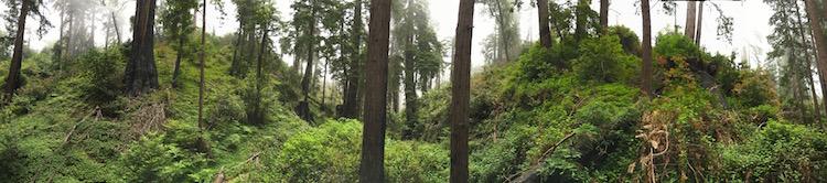 BigSurPanoTrees.jpg