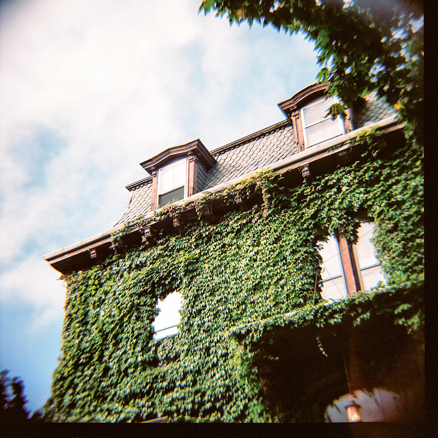 portland-ivy-covered-building.jpg