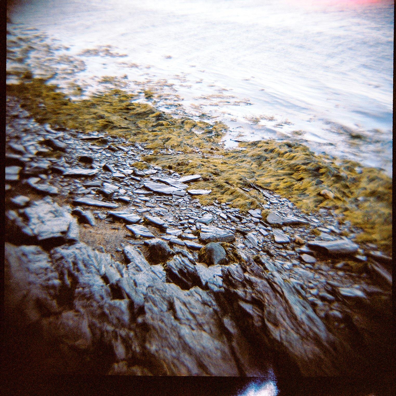 rock-weed-on-mackworth.jpg