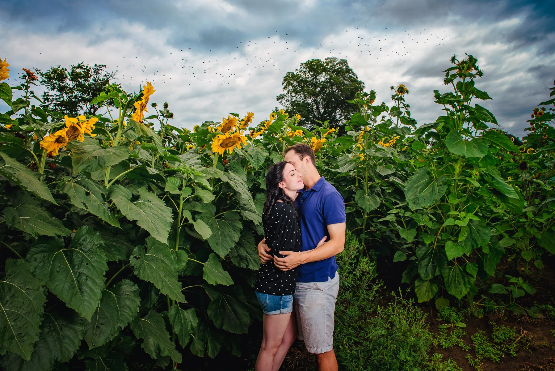 Sunflower farm engagement shoot _ Johnson's Locust Hall Farm _ Jobstown NJ-19.jpg