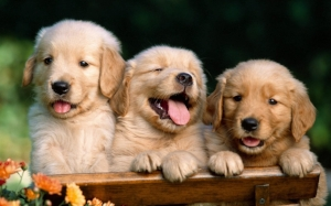 Puppies to help you feel better fast! Their names are Call, Your, and Dentist.