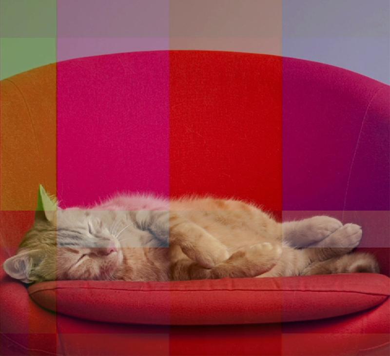 cat still 9.jpg