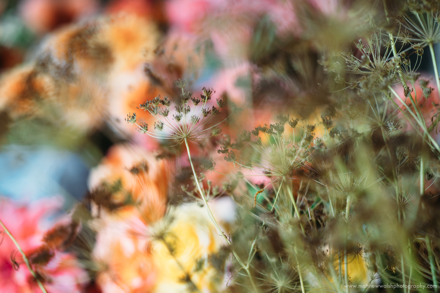 An amazing and colourful detail of the flowers