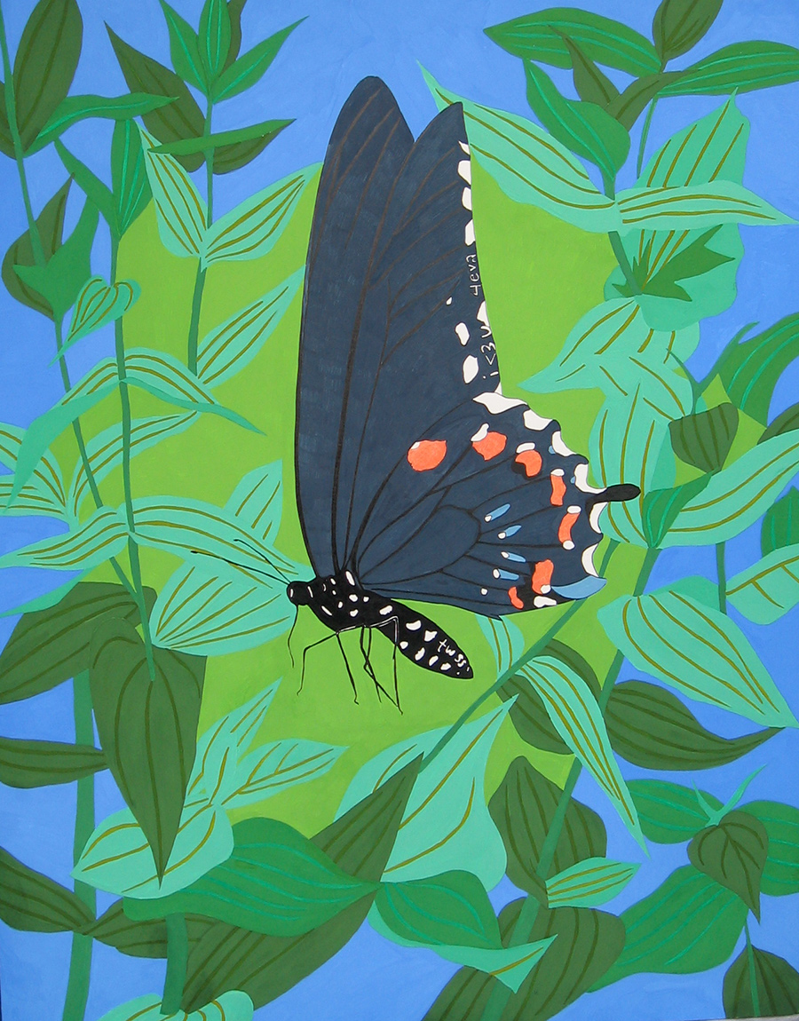 Pipevine Swallowtail (i <3 u 4eva/twss)