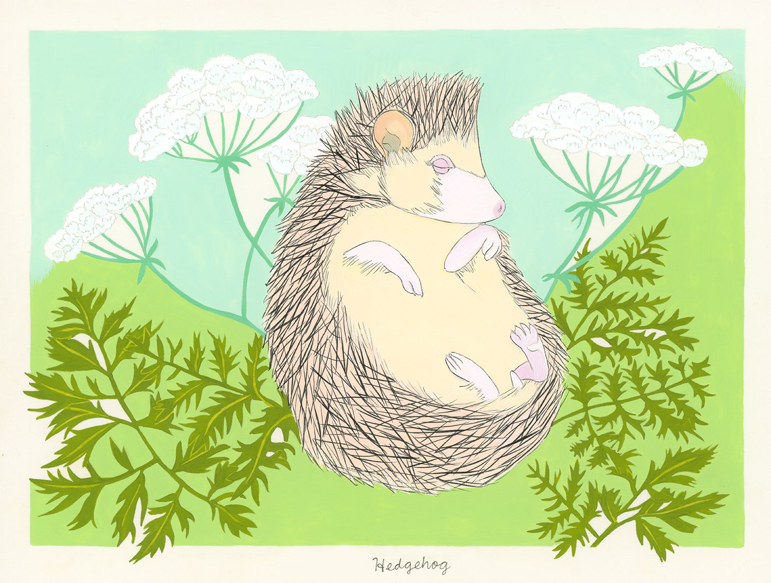 Hedgehog and Hemlock (for the one named Darcy)