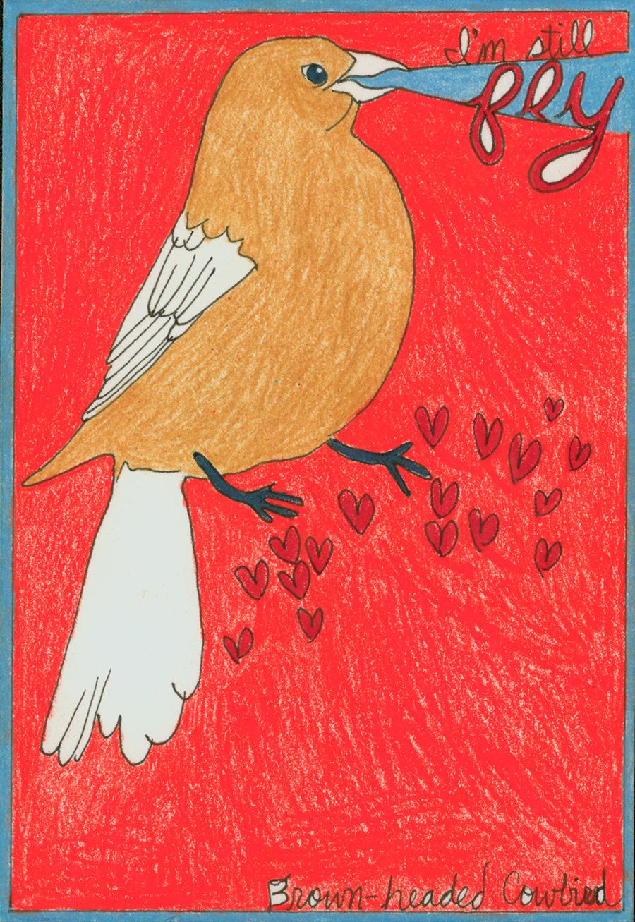 Broom-headed Cowbird