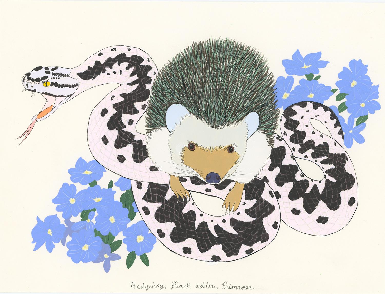Hedgehog, Black Adder, Primrose