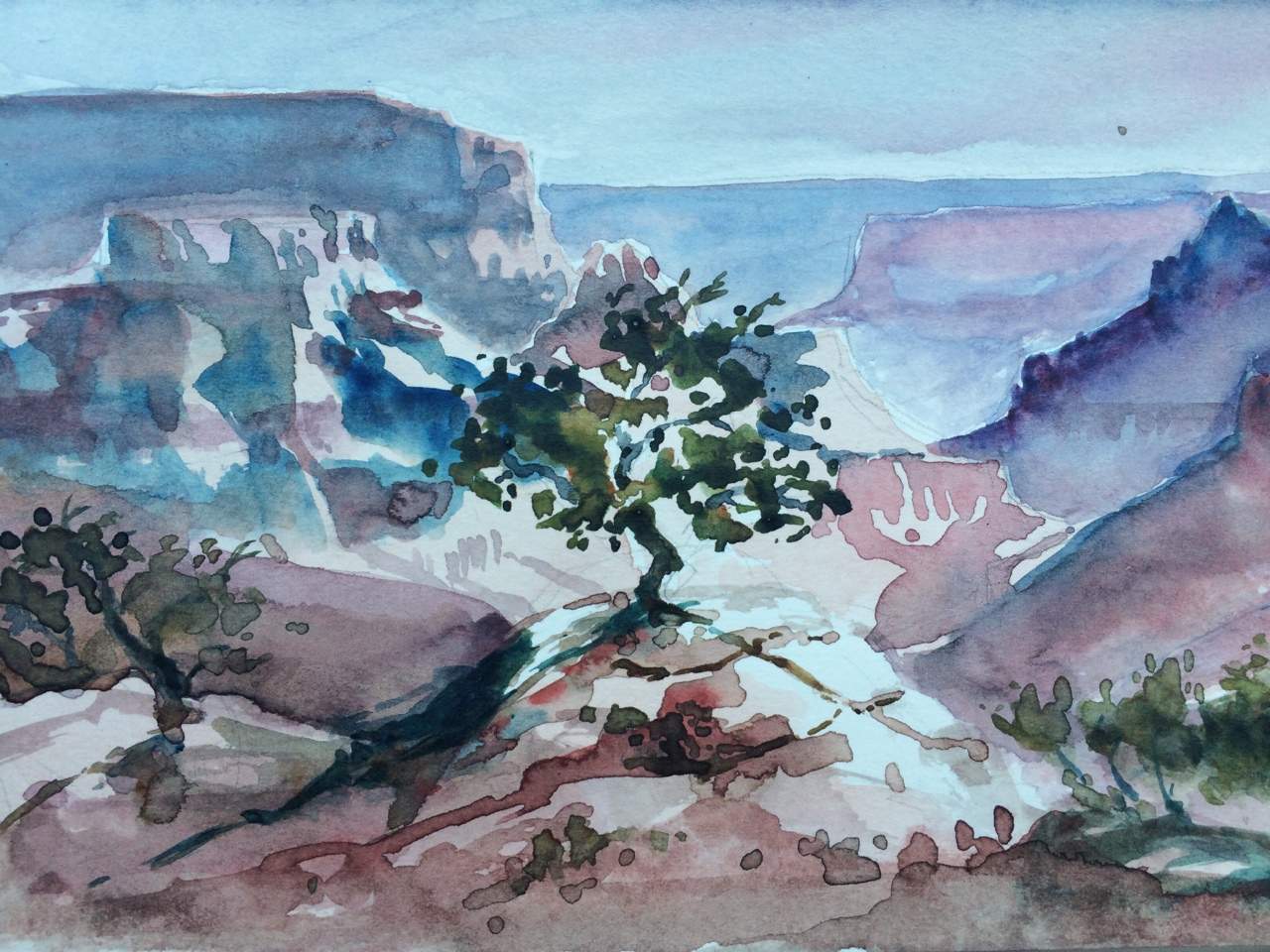 097-sapling_of_the_grand_canyon.jpg