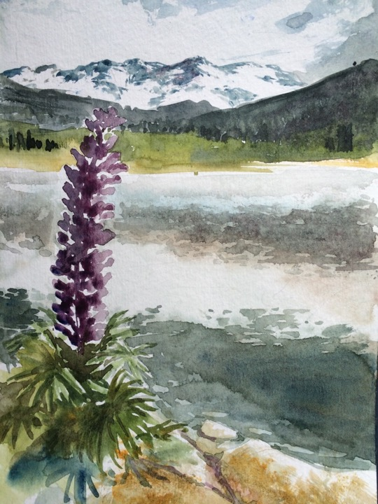 125-lupine_on_the_lake.jpg