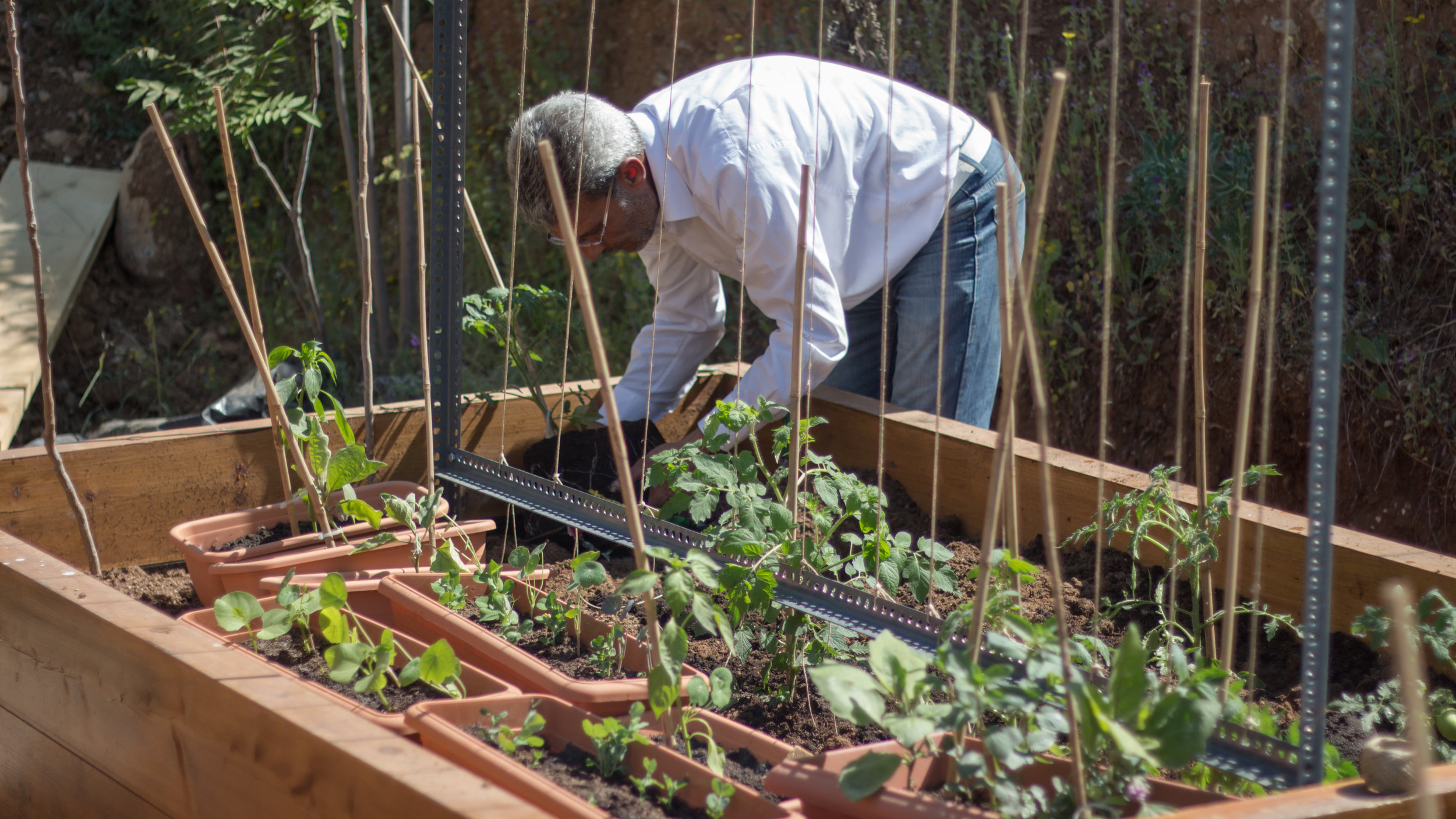 Mousa, one of the residents, planting