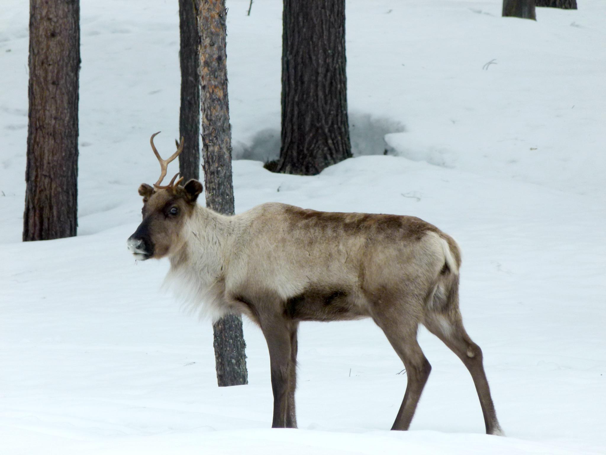 Swedish Lapland 5dz