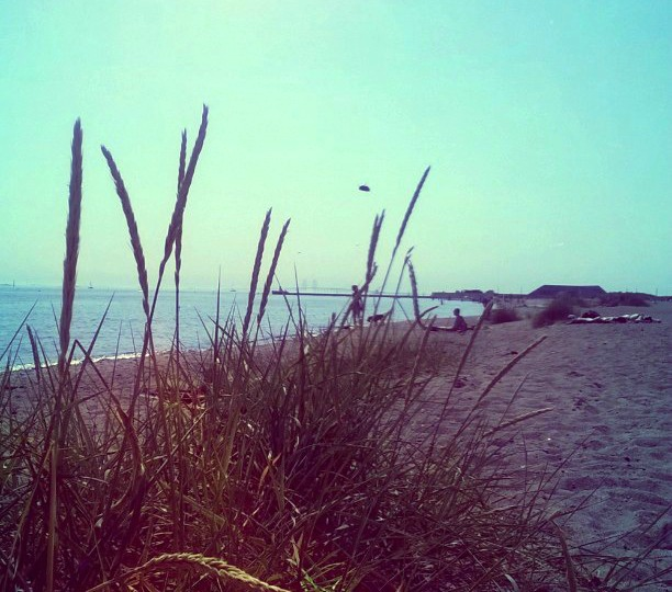 Amager Beach