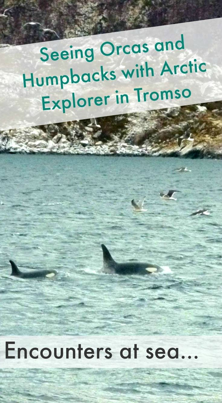 Whale Safari with Arctic Explorer in Tromso, Northern Norway.jpg