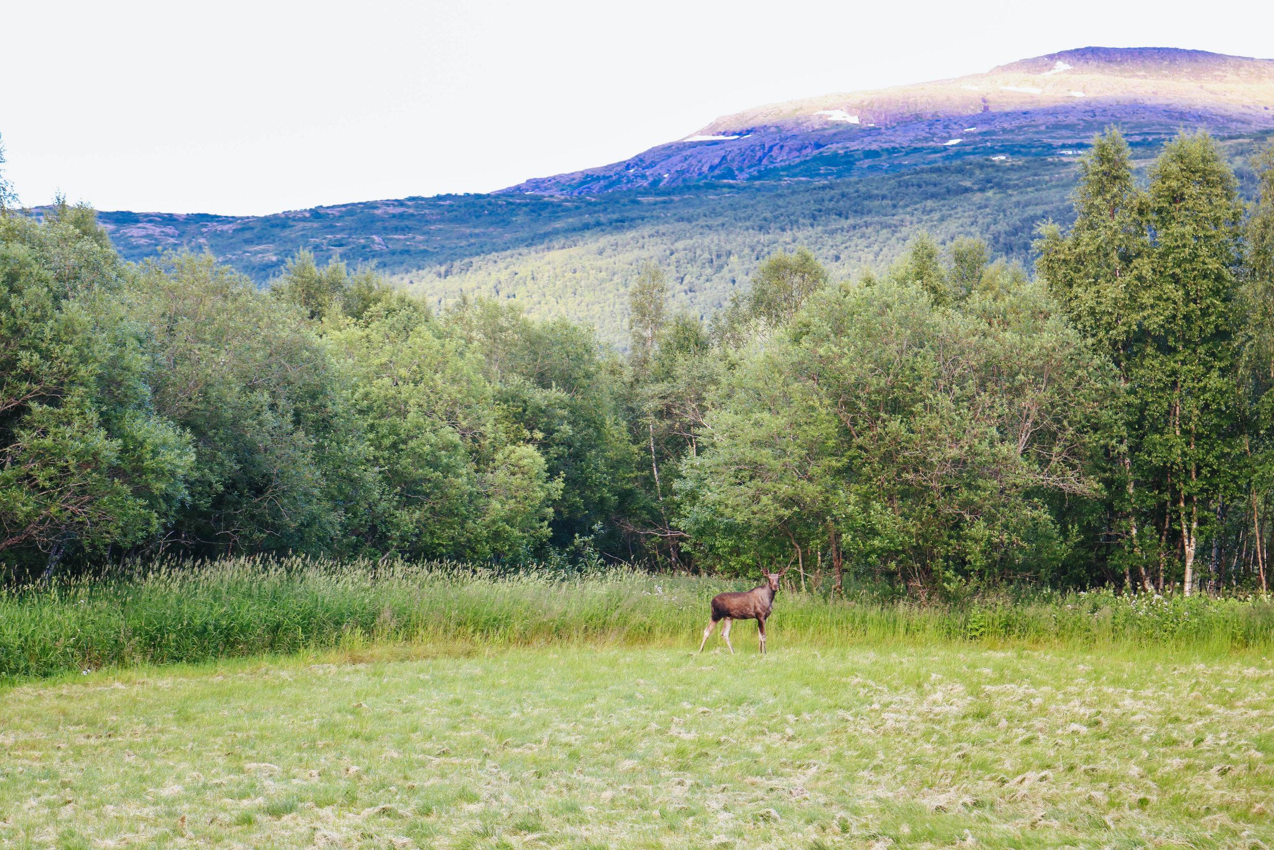 visit norway off the beaten path fauske salten northern norway