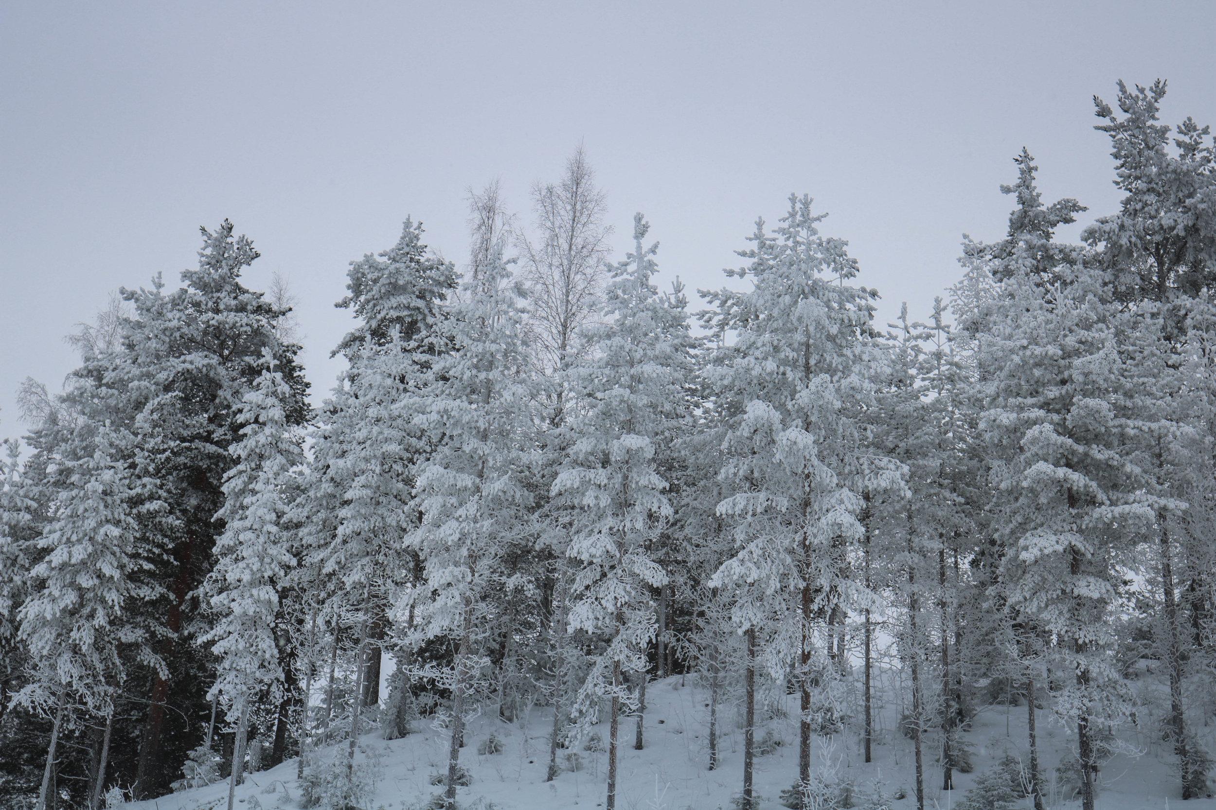 snowshoe hiking lahti finland
