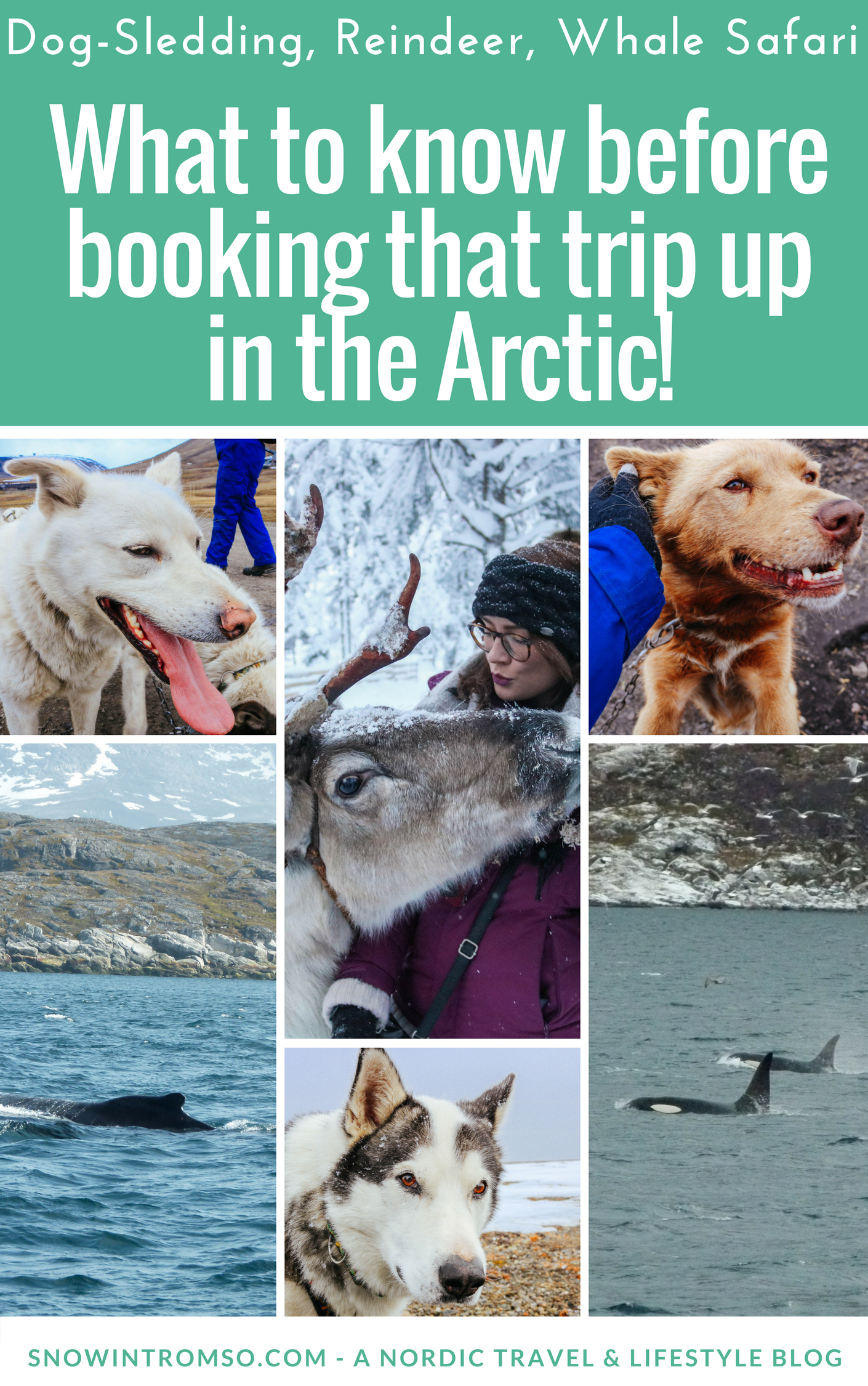 Planning a trip to the Arctic? Here's all you need to consider before booking dog- or reindeer-sledding, or a whale safari up north!