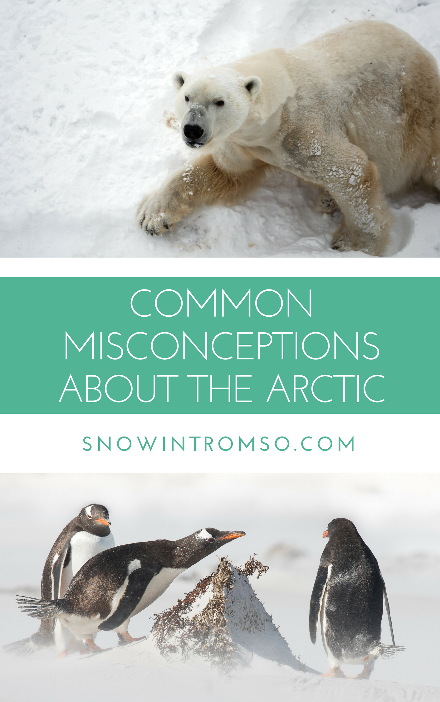 How much do you know about the Arctic? Click through to learn more!