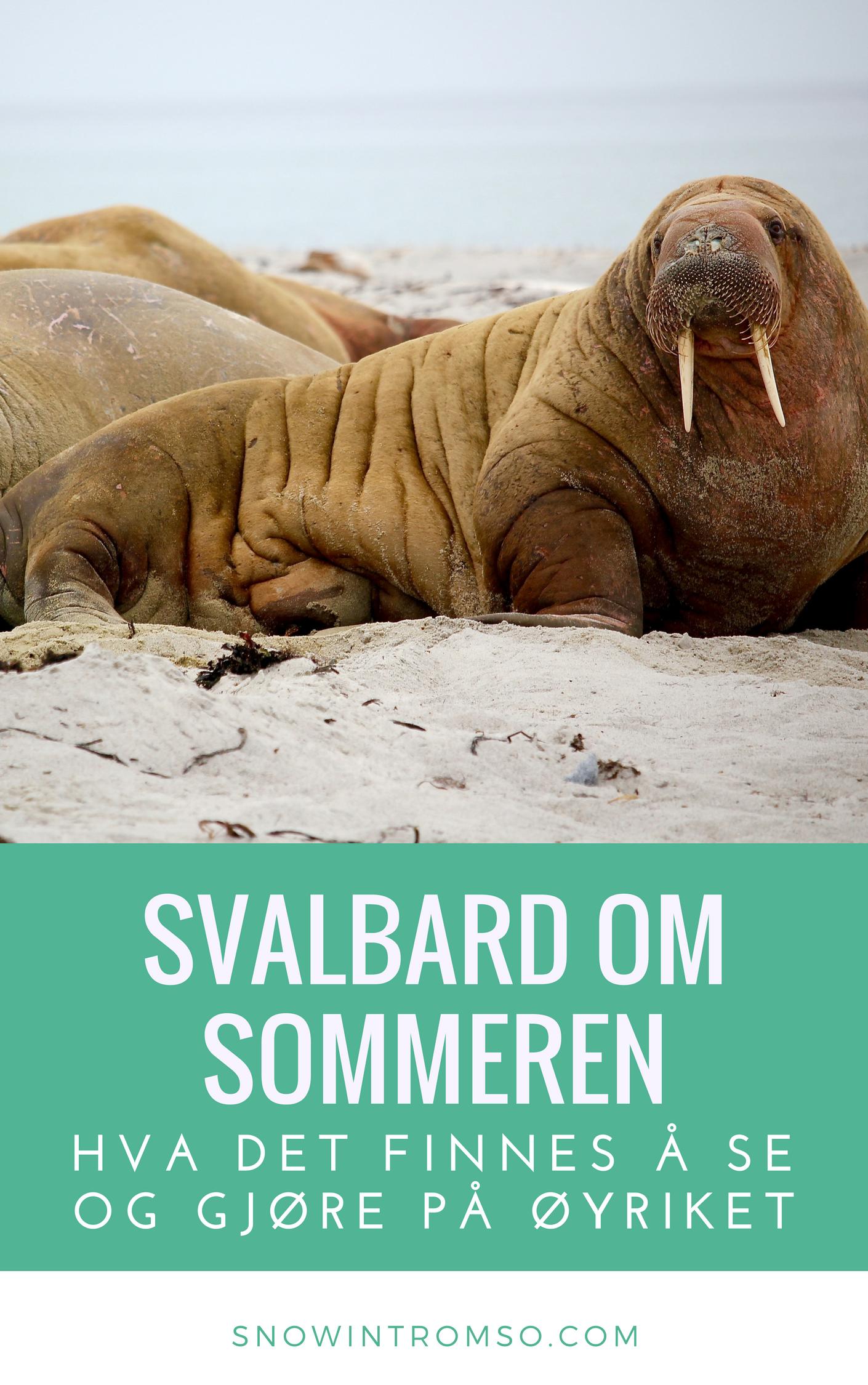 Skal du reise til Svalbard på sommeren men lurer på hva du skal se og gjøre mens du er der? Les artikklen på bloggen for å finne ut mer!