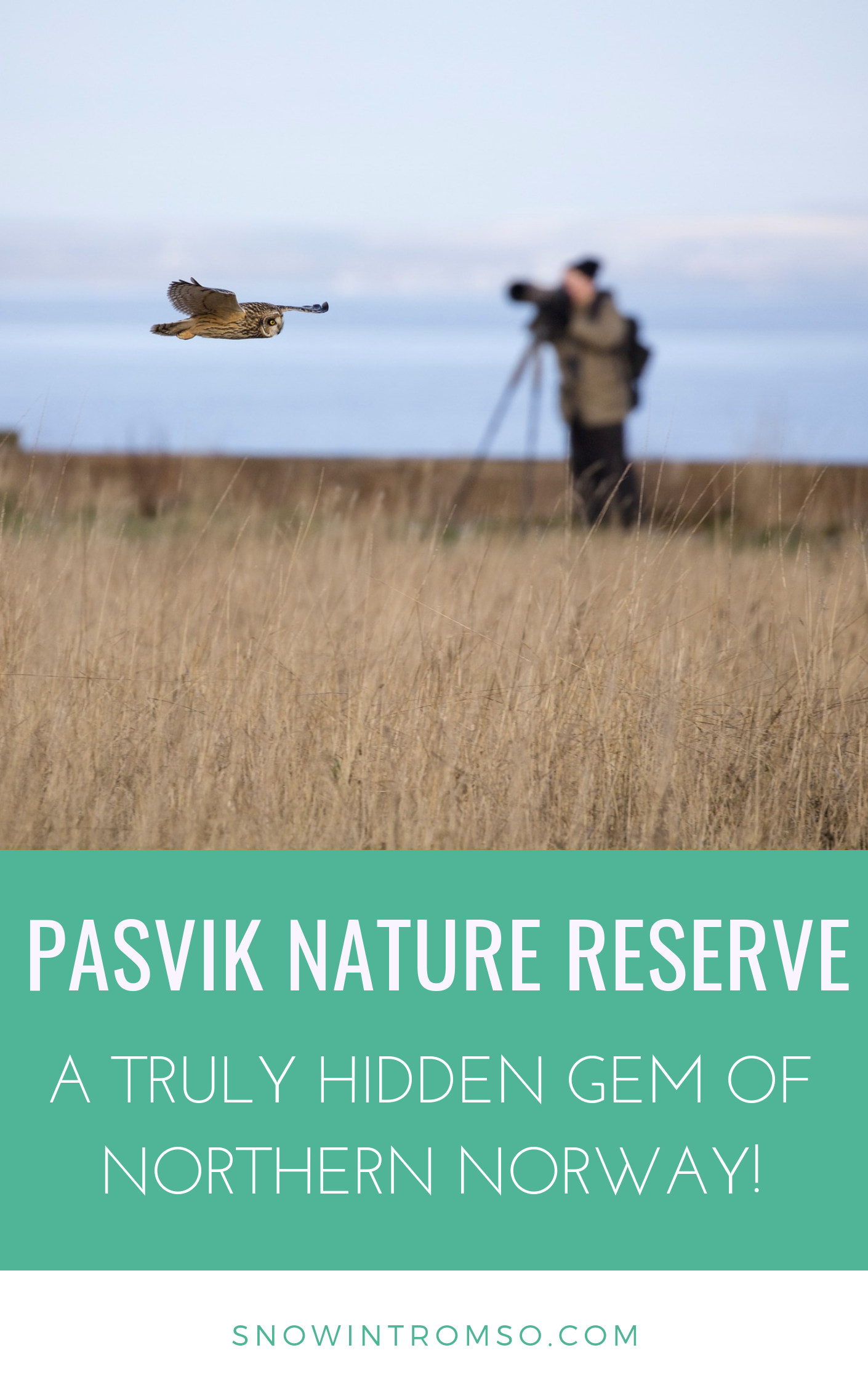 Have you ever heard of Pasvik in eastern Finnmark, Northern Norway? If you're looking for a wilderness vacation - this might be the perfect place!