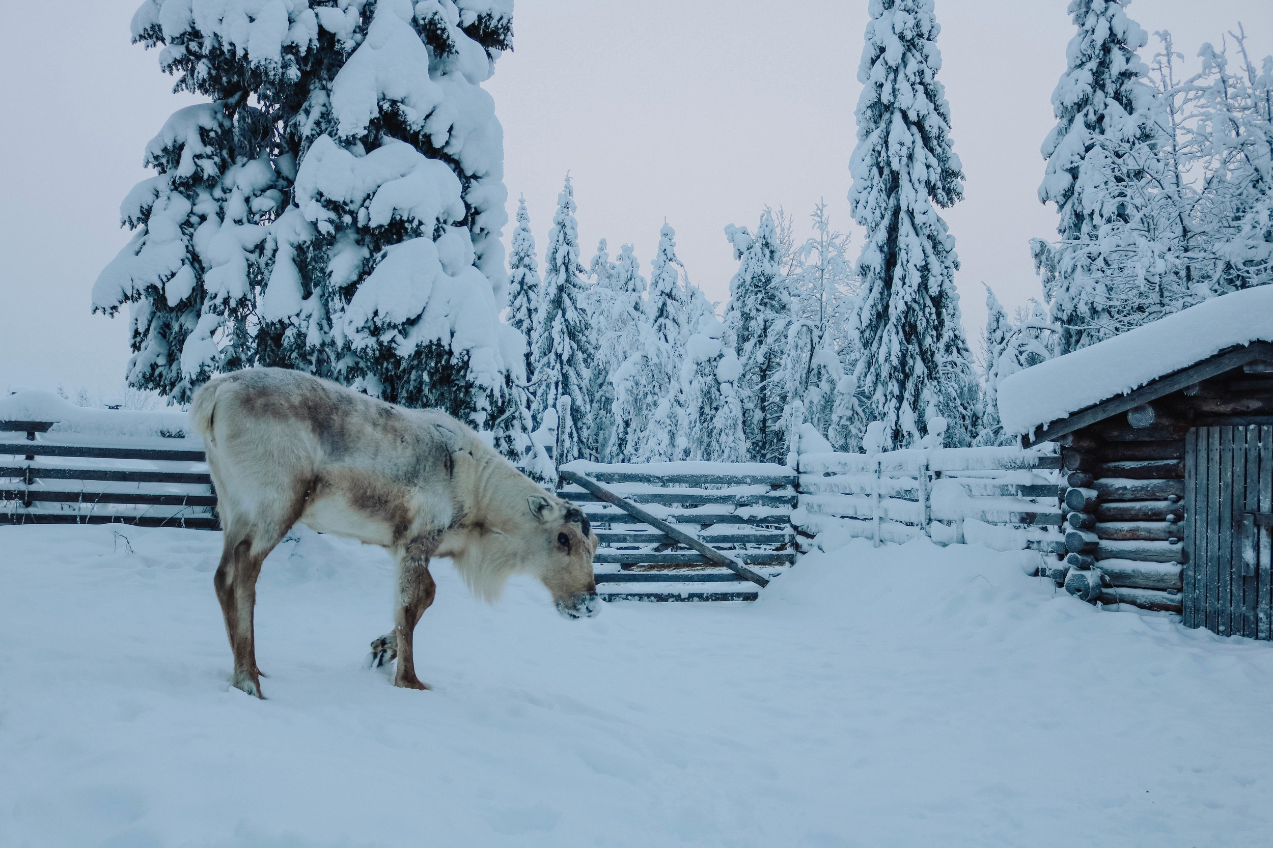"""Ruka-Kuusamo, Finland    - Looks and feels very """"arctic"""" but is actually situated below the Arctic Circle!"""