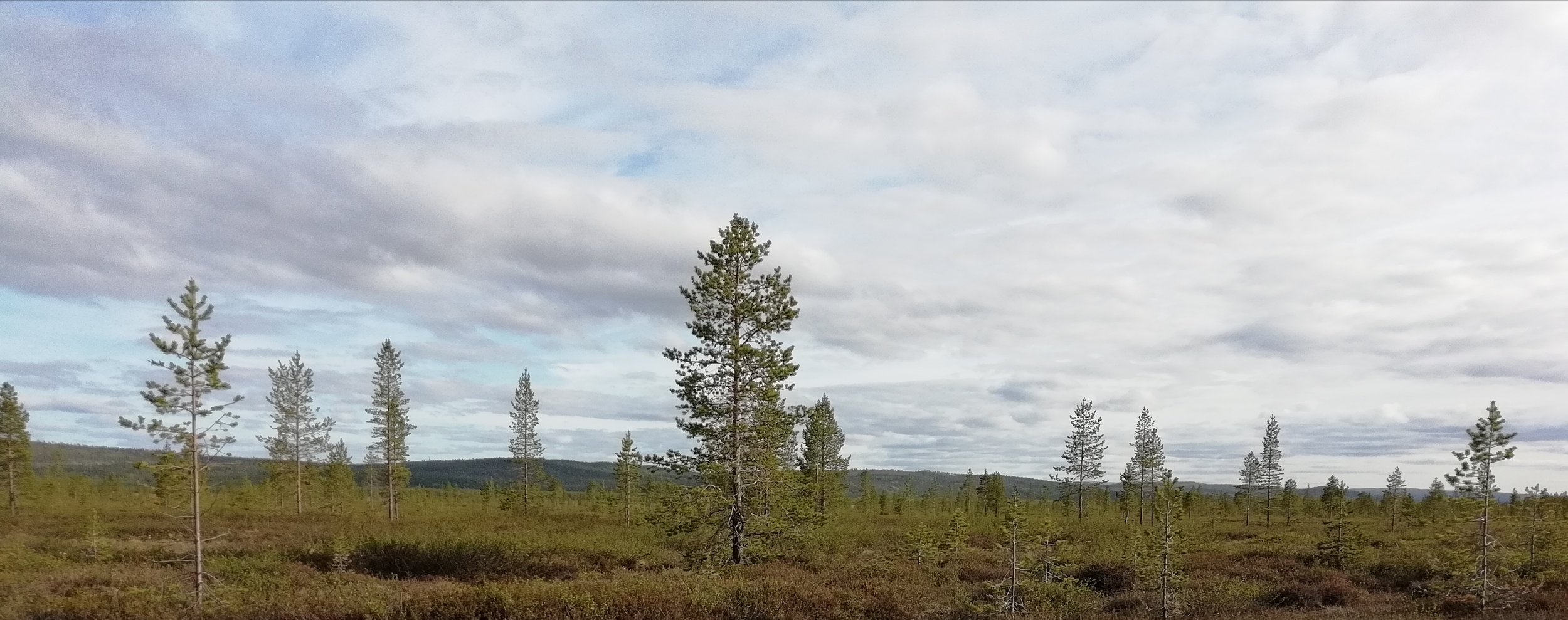 Pasvik Nature Reserve - Sprawling wilderness