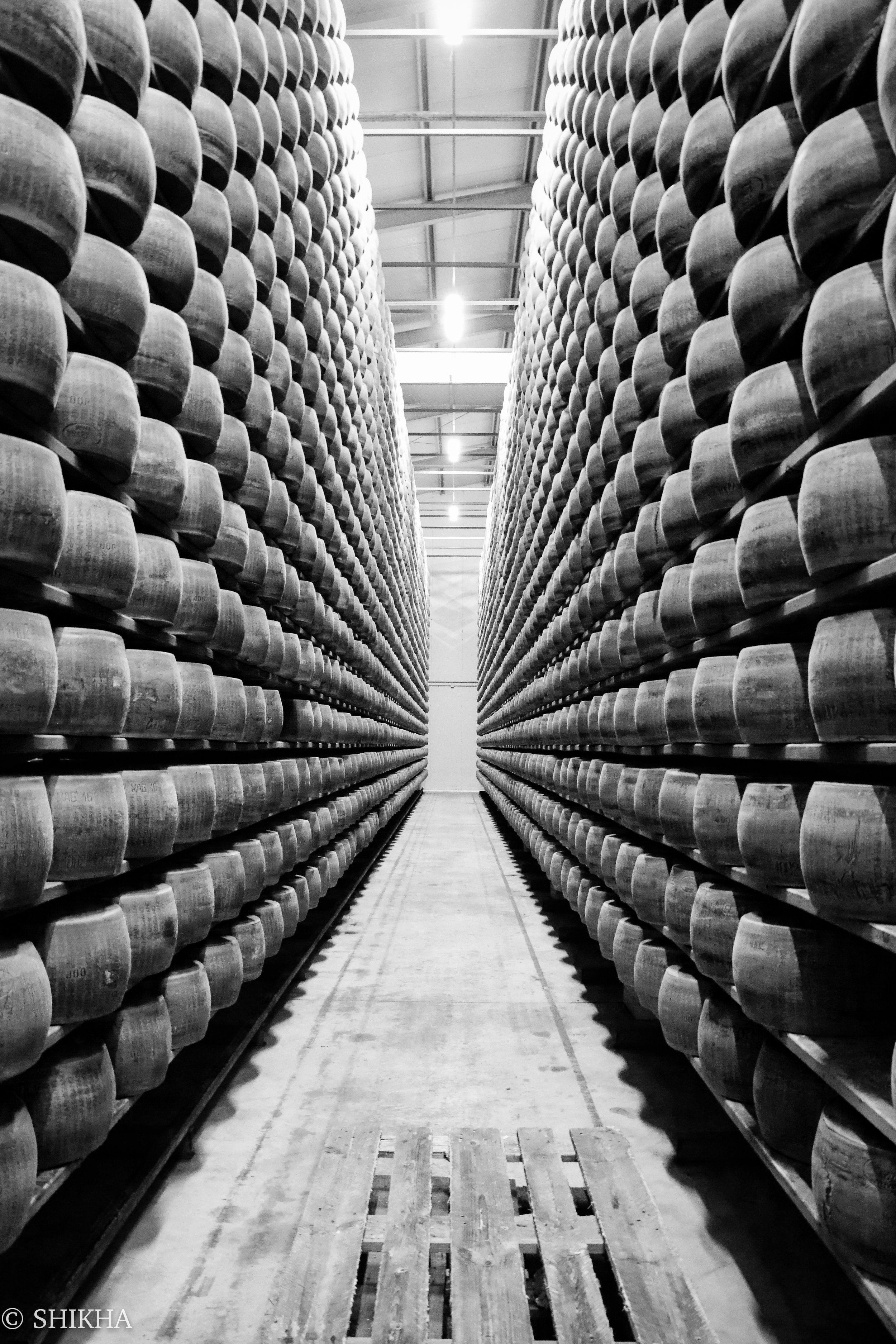 Parmigiano aging to perfection