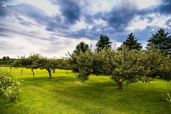 Web-orchard.jpg