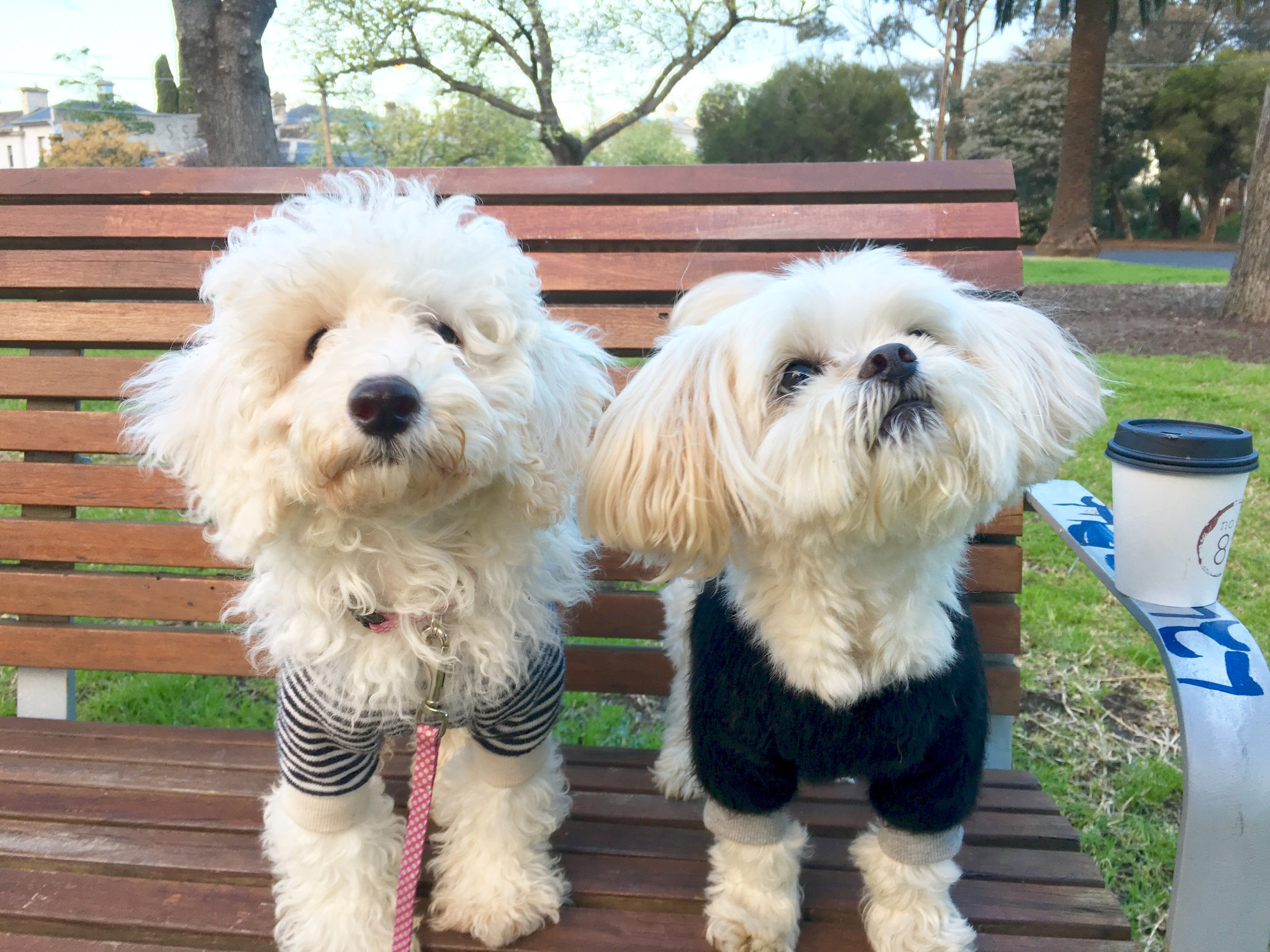 Willow (left) in  Boathouse tee , Scooby (right) in sold out  Fuzzy wool tee